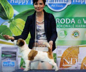 JRT, vystava psu Praha, vystavni postoj, priprava na vystavy psu,handling psu