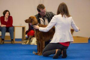 seminar pripravy na vystavy, kurz handlingu a vystavovani psu