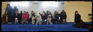 seminar pripravy na vystavy, kurz handškola handlingulingu a vystavovani psu