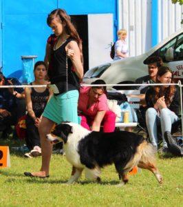 handling - výstava psů, výstavní postoj, AUO