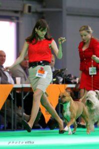 handling - výstava psů, výstavní postoj, AST