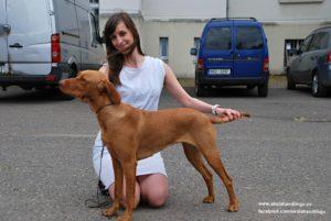 madarsky ohar, vystava psu vystavni postoj, skola vystavovani psu, handling psu