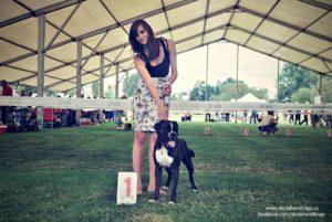 nemecky boxer vystava psu