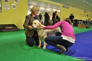 priprava na vystavu psu
