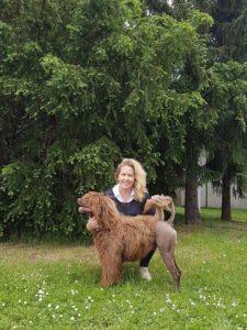 vodni portugalsky pes, vystava psu, vystavni postoj, handling psu