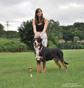 velky svycarsky salasnicky pes vystava psu
