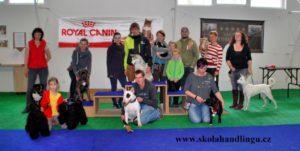 priprava na vystavy psu, handling psu, vystavni postoj, jak vystavovat psa, handling psu
