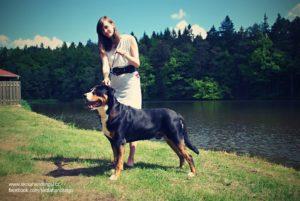 velky svycarsky salasnicky pes