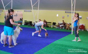 seminar priprava na vystavy psu a handling
