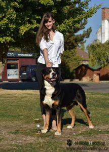 vystava psu velky svycarsky salasnick ypes