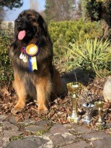 AARON CHOOVIO AMIGO DOG